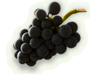 container_grapes
